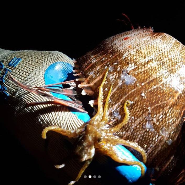 Octopus Bermuda January 2018 (2)