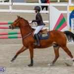 Bermuda Equestrian Federation Stardust Jumper Series, February 3 2018-6827