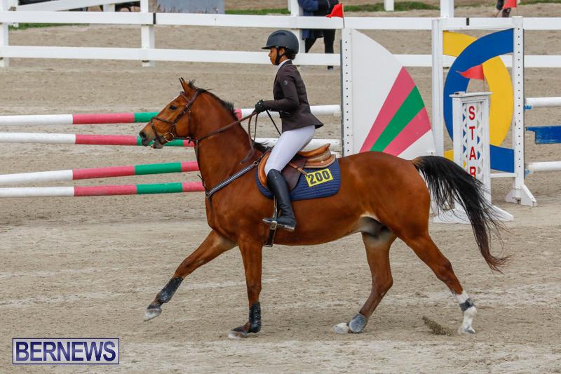 Bermuda-Equestrian-Federation-Stardust-Jumper-Series-February-3-2018-6827