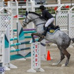 Bermuda Equestrian Federation Stardust Jumper Series, February 3 2018-6884