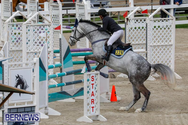 Bermuda-Equestrian-Federation-Stardust-Jumper-Series-February-3-2018-6884
