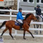 Bermuda Equestrian Federation Stardust Jumper Series, February 3 2018-6912