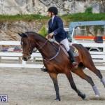 Bermuda Equestrian Federation Stardust Jumper Series, February 3 2018-6993