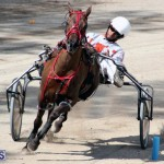 Harness Pony Racing Bermuda Feb 21 2018 2 (10)
