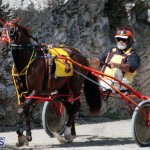 Harness Pony Racing Bermuda Feb 21 2018 2 (7)