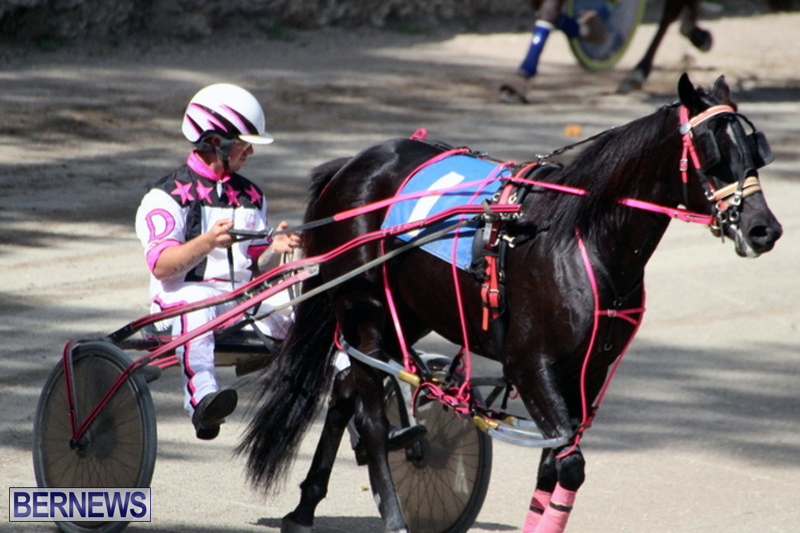 Harness-Pony-Racing-Bermuda-Feb-21-2018-2-8
