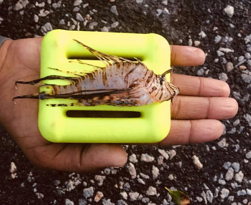 Winter-Lionfish-Derby-Bermuda-Feb-2018-1