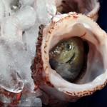 Winter Lionfish Derby Bermuda Feb 2018 (15)
