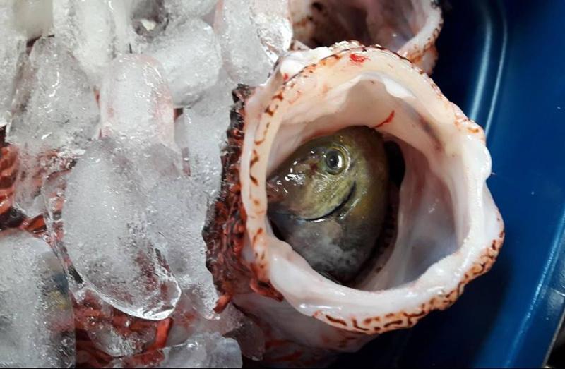 Winter-Lionfish-Derby-Bermuda-Feb-2018-15