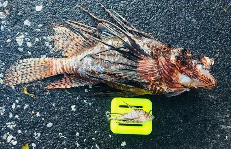Winter-Lionfish-Derby-Bermuda-Feb-2018-7