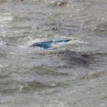 Baileys Bay Storm Mar 03 (4)
