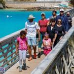Bermuda National Trust Palm Sunday Walk, March 25 2018-5451