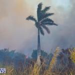 Devonshire Marsh Fire Mar 17 (13)