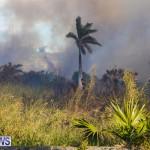 Devonshire Marsh Fire Mar 17 (14)