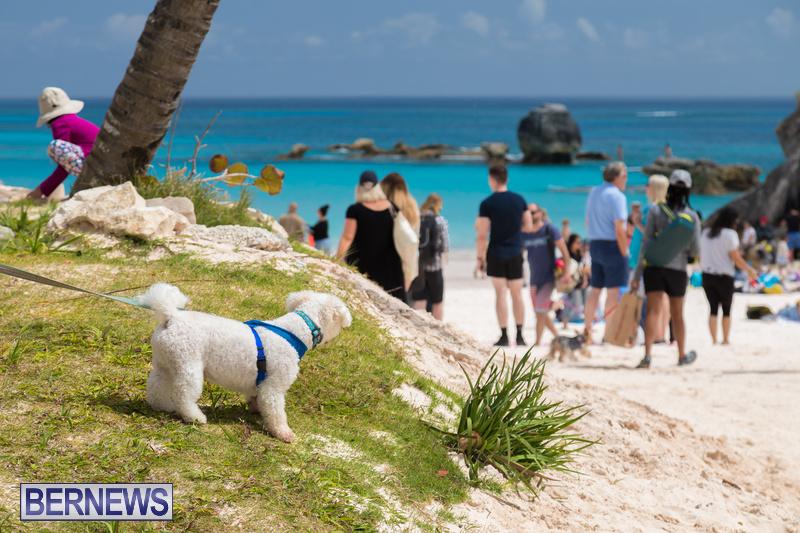Horseshoe-Beach-Good-Friday-Bermuda-March-30-2018-33