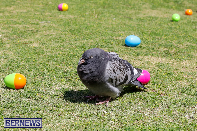 Premier's-Annual-Children's-Easter-Egg-Hunt-Bermuda-March-24-2018-5258