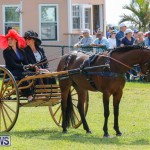 Ag Show at Botanical Gardens Bermuda, April 21 2018-2368