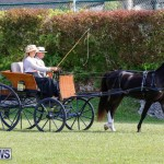 Ag Show at Botanical Gardens Bermuda, April 21 2018-2381