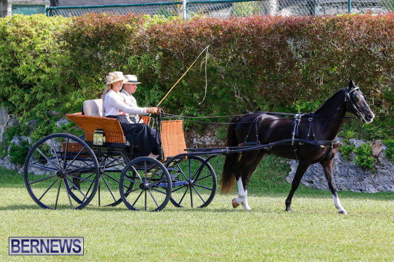 Ag-Show-at-Botanical-Gardens-Bermuda-April-21-2018-2381