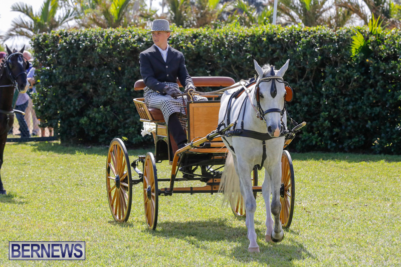 Ag-Show-at-Botanical-Gardens-Bermuda-April-21-2018-2453