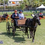 Ag Show at Botanical Gardens Bermuda, April 21 2018-2521