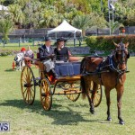 Ag Show at Botanical Gardens Bermuda, April 21 2018-2529