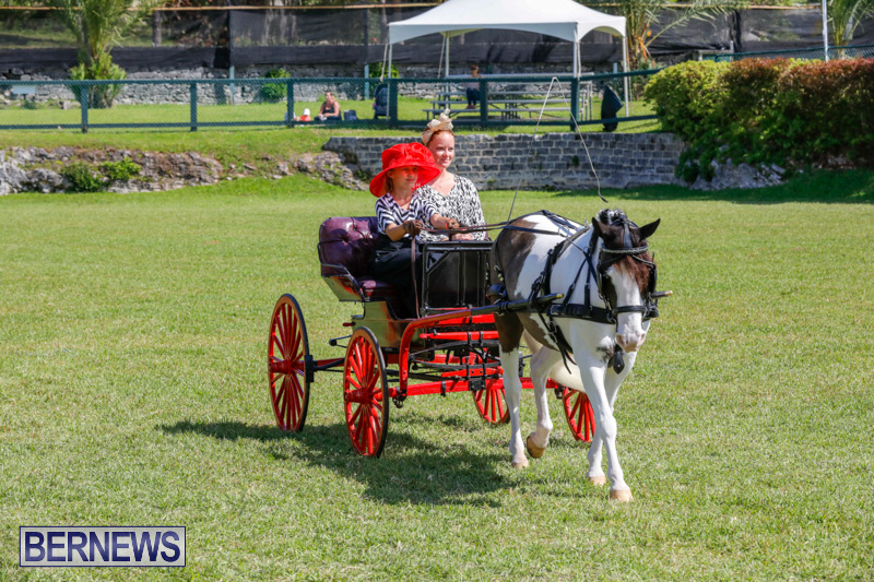 Ag-Show-at-Botanical-Gardens-Bermuda-April-21-2018-2536