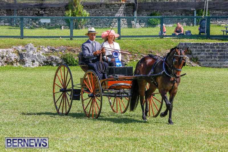 Ag-Show-at-Botanical-Gardens-Bermuda-April-21-2018-2550
