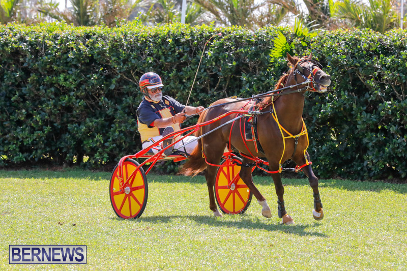 Ag-Show-at-Botanical-Gardens-Bermuda-April-21-2018-2566