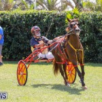 Ag Show at Botanical Gardens Bermuda, April 21 2018-2587
