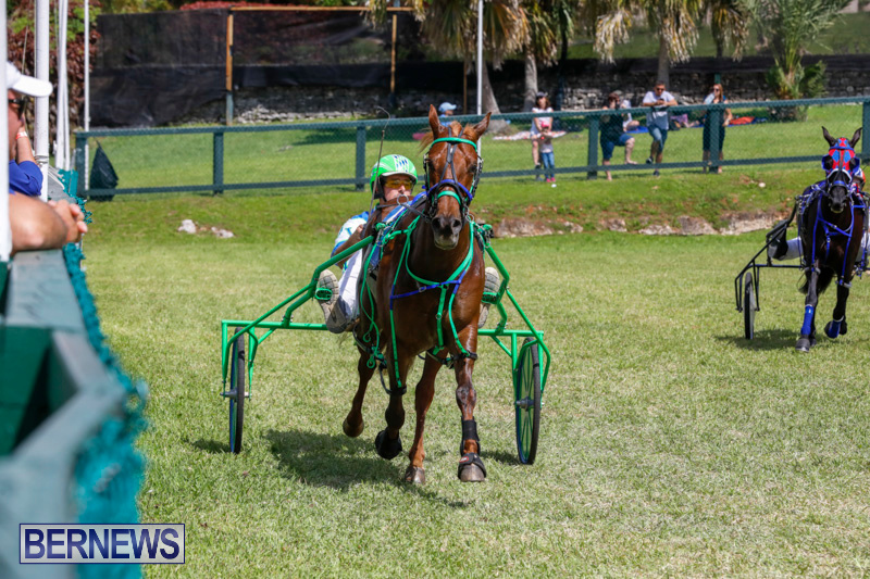 Ag-Show-at-Botanical-Gardens-Bermuda-April-21-2018-2630