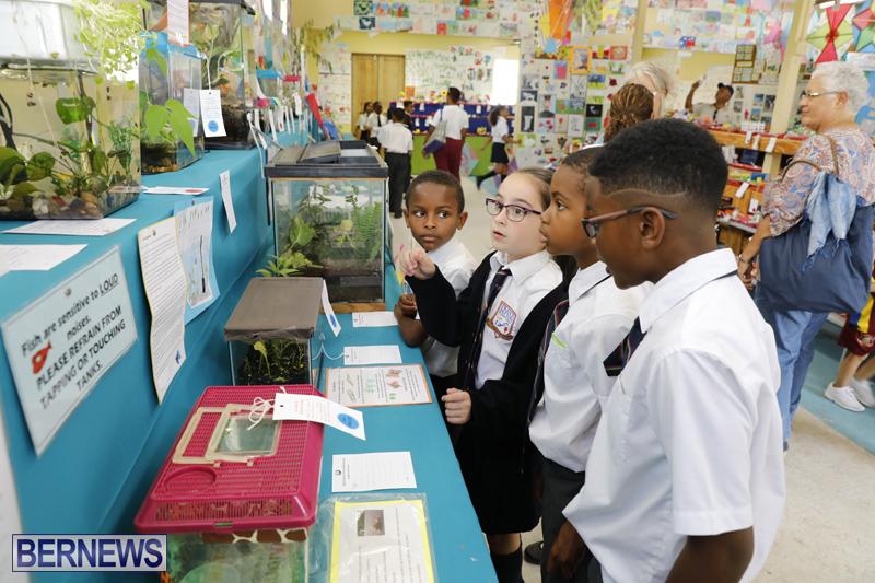 Agricultural-Show-Bermuda-April-19-2018-6
