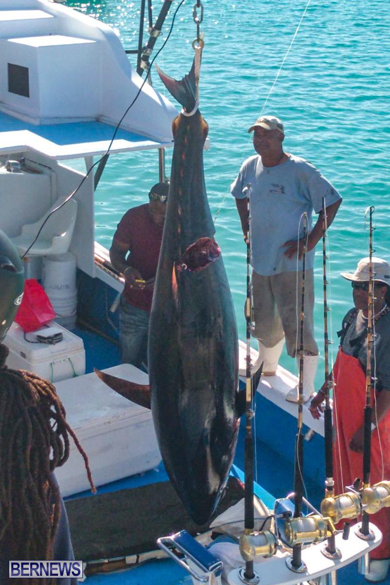 Bobby Lambe 431lb Pound Bluefin Tuna Bermuda, April 22 2018-04