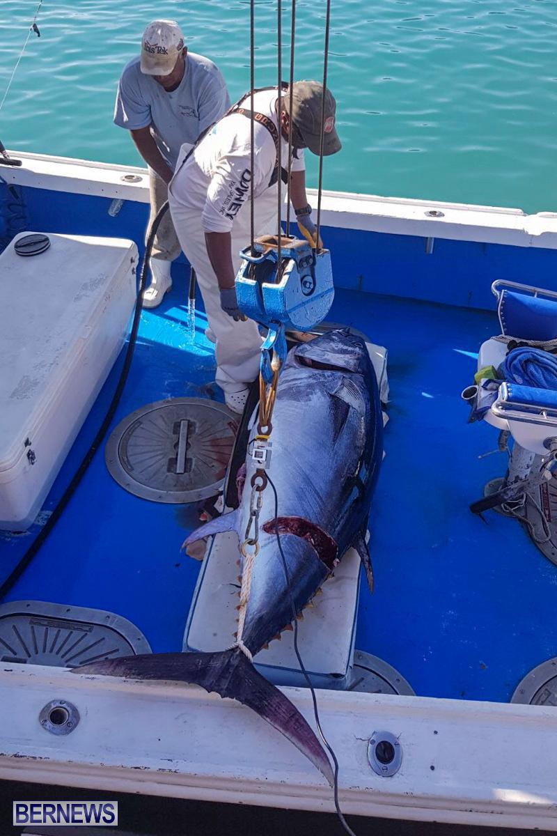 Bobby Lambe 431lb Pound Bluefin Tuna Bermuda, April 22 2018-2-2-2