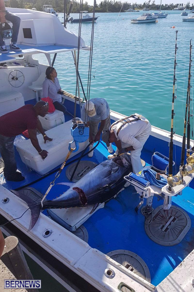 Bobby Lambe 431lb Pound Bluefin Tuna Bermuda, April 22 2018-2-2