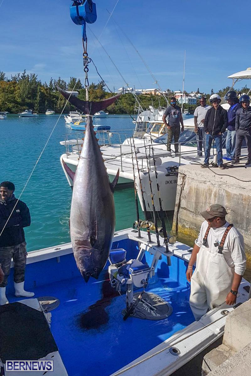 Bobby Lambe 431lb Pound Bluefin Tuna Bermuda, April 22 2018-2-5