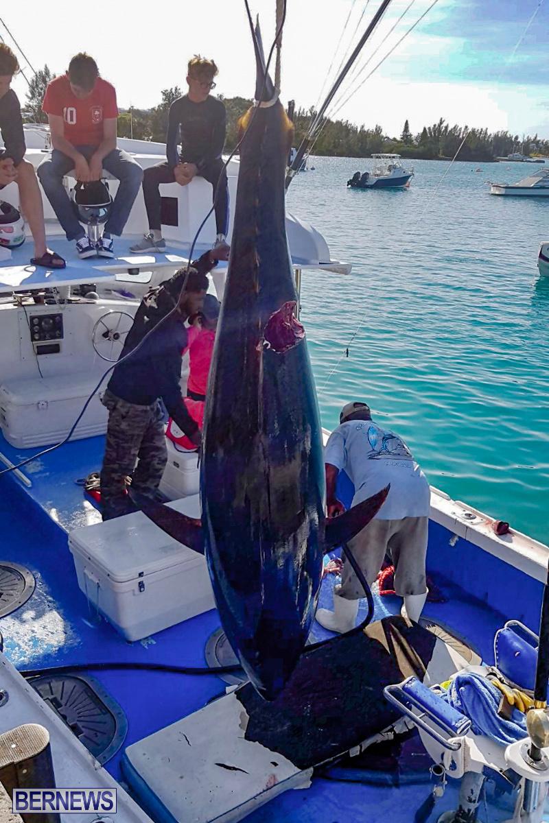 Bobby Lambe 431lb Pound Bluefin Tuna Bermuda, April 22 2018-2-7
