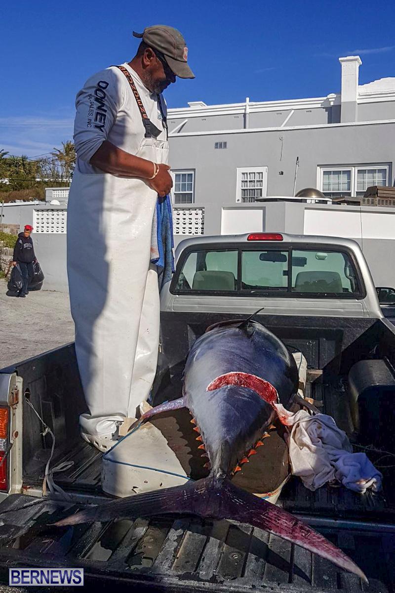 Bobby Lambe 431lb Pound Bluefin Tuna Bermuda, April 22 2018-2
