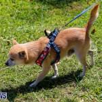 CedarBridge Academy Pet Pageant Bermuda, April 22 2018-6741