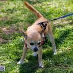 CedarBridge Academy Pet Pageant Bermuda, April 22 2018-6747