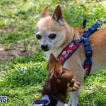 CedarBridge Academy Pet Pageant Bermuda, April 22 2018-6759