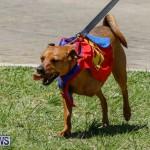 CedarBridge Academy Pet Pageant Bermuda, April 22 2018-6769