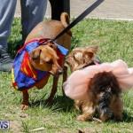CedarBridge Academy Pet Pageant Bermuda, April 22 2018-6774