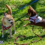 CedarBridge Academy Pet Pageant Bermuda, April 22 2018-6790