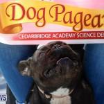 CedarBridge Academy Pet Pageant Bermuda, April 22 2018-6869