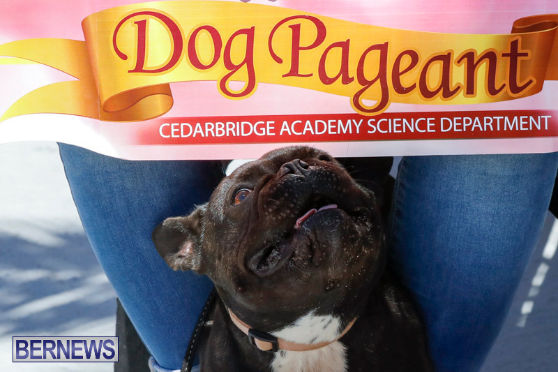CedarBridge-Academy-Pet-Pageant-Bermuda-April-22-2018-6869