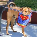 CedarBridge Academy Pet Pageant Bermuda, April 22 2018-6881
