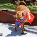 CedarBridge Academy Pet Pageant Bermuda, April 22 2018-6888