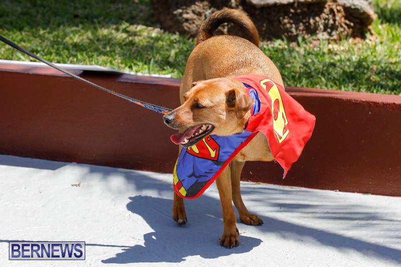 CedarBridge-Academy-Pet-Pageant-Bermuda-April-22-2018-6888