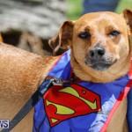 CedarBridge Academy Pet Pageant Bermuda, April 22 2018-6902